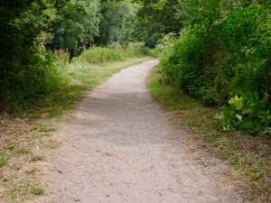 A path leading into the distance, surrounded by green vegetation